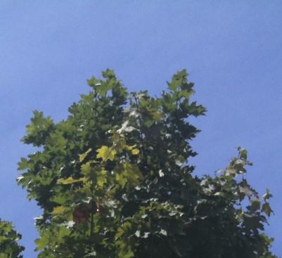 Blätter im Detail